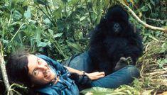Scientist Sunday: Leakey's Angels Part II, Dian Fossey Primates, Mammals, Gorillas In The Mist, Dian Fossey, Ape Monkey, Jane Goodall, Mountain Gorilla, Like Animals, Us History