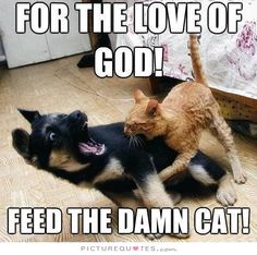 For the love of God! feed the damn cat. Picture Quotes.