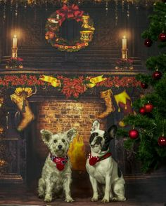 Merry Christmas! Dog Days, Merry Christmas, Dogs, Painting, Art, Merry Little Christmas, Art Background, Pet Dogs, Painting Art