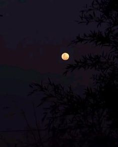 Night Aesthetic, Aesthetic Movies, Aesthetic Videos, Aesthetic Backgrounds, Beautiful Nature Scenes, Beautiful Moon, Gif Terror, Skyline Homes, Video L