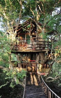 Treehouse in China by David Greenbverg. David Greenberg is an artist and tree house designer. This is one of the tree houses he designed in China
