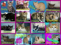 These cats/kittens desperately need a save by 3pm Mon 1/12/14. If you are a rescue or know a rescue that can help to contact Renbury Farm Animal Shelter, NSW