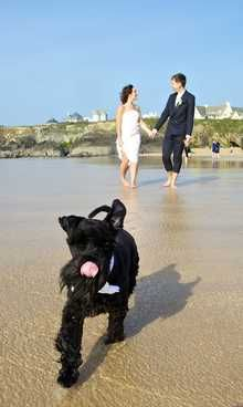 Mr Bones, 18 month old black Miniature Schnauzer.   Pedlars 110th Dog of the Week