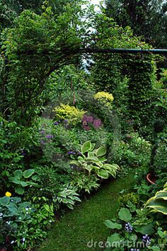 Group Plants In The Shadow Garden Place Royalty Free Stock Photo - Image: 13228075