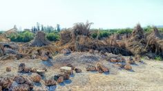 el combustible del horno es totalmente natural compuesto de hojas de palmeras