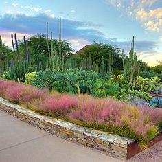 Cactus as canvas: Phoenix, AZ - Top Spots for Public Art & Gardens - Sunset