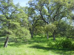 Stroll through an oak forest in the spring