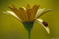 "500px / Photo ""Enchanting Spring"" by Vie Lipowski"