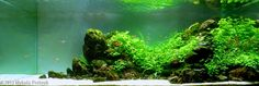 2013 AGA Aquascaping Contest - Entry #177