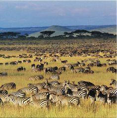 Serengeti National Park | Indsendt af Gforpcrossing kl. 07.24