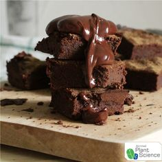 Chocolate & cockroaches – Plant Science by Atrimed One Bowl Brownies, Best Brownies, Best Brownie Recipe, Brownie Recipes, Bowl Cake, Brownie Cake, Food Facts, Chocolate, Cake Pans