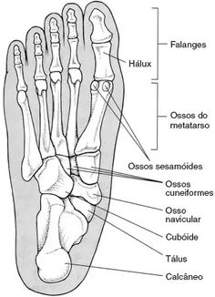 Informações dos ossos do pé Anatomy Study, Greys Anatomy, Human Skeleton Anatomy, Health And Physical Education, Physical Therapy, Trauma, Medical Anatomy, Human Anatomy And Physiology, Muscle Anatomy