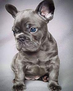 I shall name him Stitch