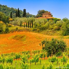 Renting a small car lets you explore the real countryside of Tuscany Italy at your leisure.  Late spring and early fall are great times.