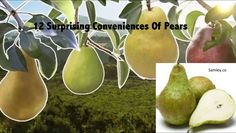 12 Surprising Conveniences Of Pears