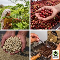 Click 'like' if you're thankful for the many hands that make your morning cup of #coffee possible. #FairTrade