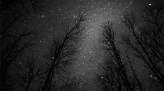 gif beauty Black and White Cool beautiful dope perfect sky landscape trees b&w night space galaxy stars dark nature forest amazing universe scenery animated gif star Albus Severus Potter, Gifs, Image Ciel, Animation, Time Lapse Photography, Nature Gif, Nature Images, Sky Landscape, Winter Landscape