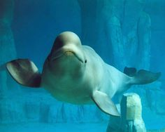 Yoga with Belugas @The Active Times
