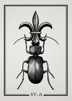fleur de lis + beetle