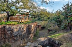 African Gorilla Forest, Houston Zoo, Texas, USA by Portico Group