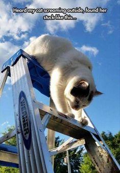 Stuck? #funnycats #catmemes #funnymemes http://www.nojigoji.com.au/