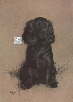 1930s Black Cocker Spaniel Dog Print, Antique Dog Art by NGArtPrints http://etsy.me/1sZJgYp via  #etsy