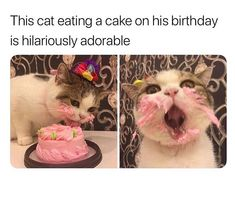 Toe-Bean-Lickin'-Good Caturday Memes - World's largest collection of cat memes and other animals Cute Little Animals, Cute Funny Animals, Funny Cute, Cute Cats, Funny Animal Memes, Funny Animal Pictures, Cat Memes, Funny Memes, Animal Captions