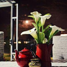 #photography #guesthouse #flamingcherry #fcd #carelia #careliakuhn #designer #brandspecialist #bokmakierie #bokmakierieguesthouse Florists, Design Projects, Cherry, Instagram Posts, Plants, Photography, Ideas, Photograph, Fotografie