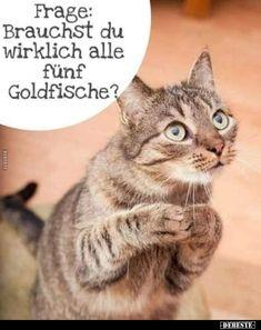 Bad Cats, Crazy Cats, Tierischer Humor, Funny Cute Cats, Funny Memes, Jokes, Cat Life, Lol, Pets