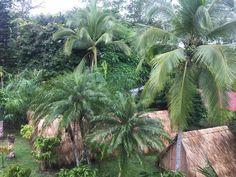 Volunteer in Costa Rica: Sloth/Mammal Conservation Amphibians, Mammals, Costa Rica Sloth, Turtle Conservation, Volunteer Abroad, Sea Turtles, Cactus Plants, Pet Care, Wildlife