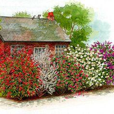 La haie persistante 4 arbustes jardin pinterest - Haie fleurie 4 saisons ...