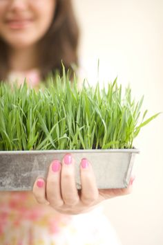 diy wheat grass - great to spike woodland / Alice in wonderland / willy wonka themed decorations