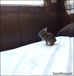 This overachieving baby bunny: | 23 Animal GIFs That Should Be World Famous