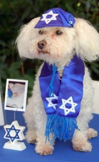 Details about Pet Jewish New Year Cards Dog Rosh Hashanah