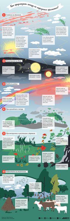 Как предсказать погоду по народным приметам? | Инфографика | Вопрос-Ответ | Аргументы и Факты