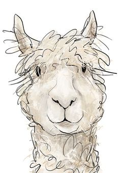 The Border Mill is a small fibre spinning mill in the Scottish Borders. Specialising in spinning alpaca fleece for owners & breeders across the UK & Europe. Alpacas, Animal Drawings, Animal Paintings, Art Drawings, Cute Llama, Llama Llama, Baby Llama, Llama Face, Watercolor Animals