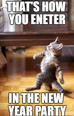 Are you searching for the funniest friday feeling memes right now? Check out the top 10 best and funny friday feeling meme below. Funny New Years Memes, New Year Meme, Funny Cat Memes, Hilarious, Funniest Memes, Feels Meme, Divorce Memes, Happy Birthday Meme, Birthday Memes