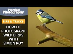 Ok, so don't actually throw away your wide angle lens. This video has been made to show that not all landscape images need to be photographed with a wide ang... Photography Cheat Sheets, Photography Tips, Landscape Photography, Nature Photography, Photographing The Moon, Photoshop Youtube, Editing Skills, Take Better Photos, Wild Birds