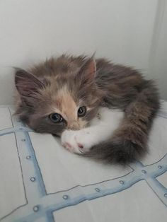 Cute Kittens, Cute Baby Cats, Cute Little Animals, Cute Funny Animals, I Love Cats, Crazy Cats, Photo Chat, Cat Aesthetic, Cute Creatures