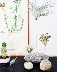 Grønn utstilling