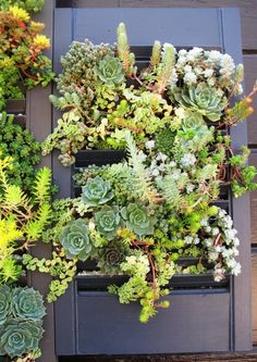 Lila B. Design, a San Francisco-based floral and garden design firm founded by Baylor Chapman, created this new take on the DIY vertical garden kit. Chapman painted salvaged solid wood shutters and then transformed them into vertical potting boxes filled with soil, planted with a variety of low-maintenance succulents. Perfect for the urban gardener.
