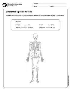 Diferentes tipos de huesos