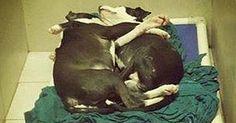 Un cane cieco e suo fratello che gli fa da guida verranno adottati insieme
