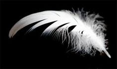 """The angelic looking feather Jordan is always finding with her mysterious notes from """"Ray""""."""