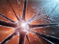 Scientists Discover How the Brain Ages