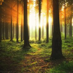 Rays Of Fire by MarcoHeisler.deviantart.com on @DeviantArt