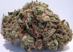 Pink Panther Medical Marijuana