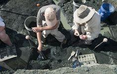 Excavating invertebrate fossils in the Mantua quarry (New Jersey).