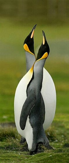 Meet me in the middle. Penguins make me happy.  Love is Ageless http://www.susanhaught.com