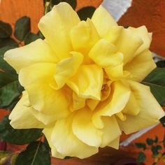 F L O W E R    #amazing #contrast #details #flowers #about #amazingnature #art #artwork #flowergram #iphonephotography #procamapp #goodtimes #landscape #beautifullife #bestoftheday #feelsgood #memory #moment #october #autumn #autumn2016 #explore #exploretheworld